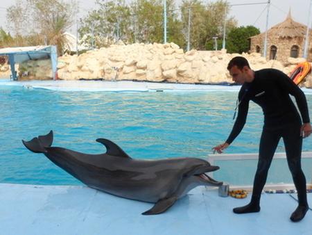 Chi parla con i delfini mangia le mele